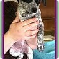 Adopt A Pet :: Wendy - Staunton, VA