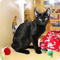 Adopt A Pet :: Jewel - Farmingdale, NY