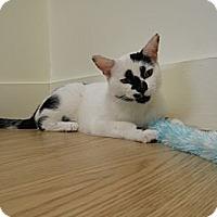Adopt A Pet :: Morris - Milwaukee, WI