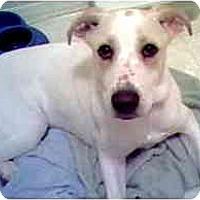 Adopt A Pet :: Trish - Scottsdale, AZ
