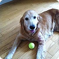 Adopt A Pet :: Kate - Jacksonville, FL