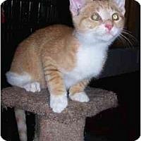 Adopt A Pet :: Celine's All Stars - cincinnati, OH