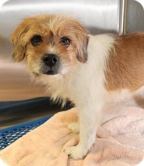 Terrier (Unknown Type, Medium) Mix Dog for adoption in London, Ontario - Maxie