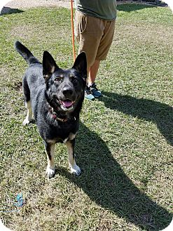 German Shepherd Dog Mix Dog for adoption in Hammond, Louisiana - Dallas