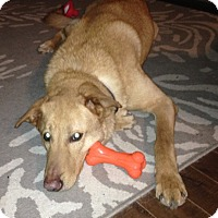 Adopt A Pet :: Spikey - Rigaud, QC