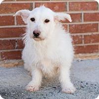 Adopt A Pet :: Santa Monica - Alpharetta, GA