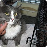 Adopt A Pet :: Thor - Fallon, NV