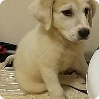 Adopt A Pet :: Ginn - Kyle, TX