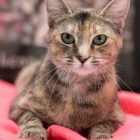 Adopt A Pet :: Olive - Madison, GA