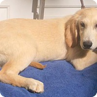 Adopt A Pet :: Wesley - Birch Tree, MO