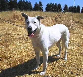 German Shepherd Dog Mix Dog for adoption in Pleasant Grove, California - Sophie