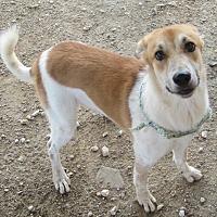 Adopt A Pet :: HOGAN - Pilot Point, TX