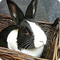Adopt A Pet :: Jax - Newport, DE