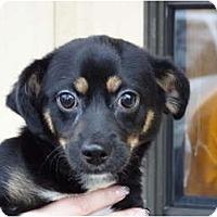 Adopt A Pet :: LUCKY - Plainfield, CT