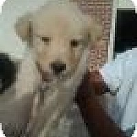 Adopt A Pet :: Peta - New Boston, NH