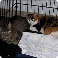 Adopt A Pet :: Samantha - Syracuse, NY