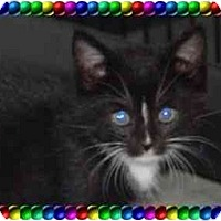 Adopt A Pet :: FIRE FLY - KANSAS, MO