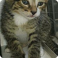 Adopt A Pet :: Clawdean - Chandler, AZ