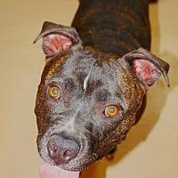 Adopt A Pet :: Marcel- Smiles Forever Rescue - Fredericksburg, VA
