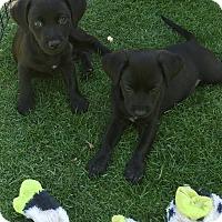 Adopt A Pet :: Elsa and Nina - Scottsdale, AZ