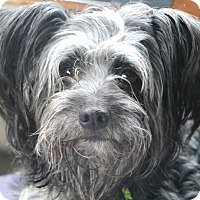 Adopt A Pet :: Watkins - Norwalk, CT