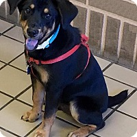 Adopt A Pet :: Dicky - North Brunswick, NJ