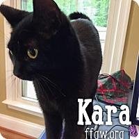 Adopt A Pet :: Kara - Merrifield, VA