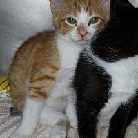 Adopt A Pet :: Jasper - Port Clinton, OH