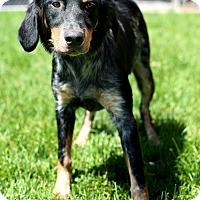 Adopt A Pet :: Annie - Appleton, WI