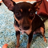 Adopt A Pet :: Crystal - Centreville, VA