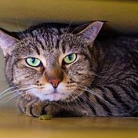 Adopt A Pet :: Balboa/Meow Meow - Palm Springs, CA