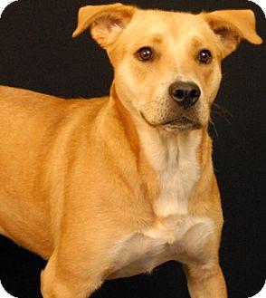 Labrador Retriever Mix Dog for adoption in Newland, North Carolina - Scarlet