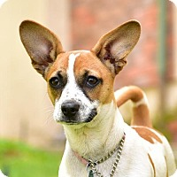 Adopt A Pet :: CARLY - Marina Del Ray, CA