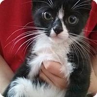 Adopt A Pet :: Jacko - Oakley, CA