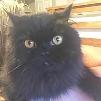 Adopt A Pet :: Suki - Davis, CA