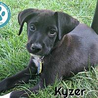 Adopt A Pet :: Kyzer - Kimberton, PA