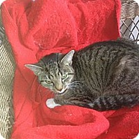 Adopt A Pet :: Maleficent - Tarboro, NC