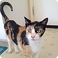 Adopt A Pet :: Chloe - Laguna Woods, CA