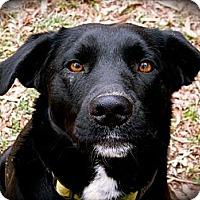 Adopt A Pet :: Moonshadow - Jackson, TN
