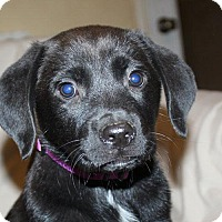 Adopt A Pet :: April - PENDING, in Maine - kennebunkport, ME