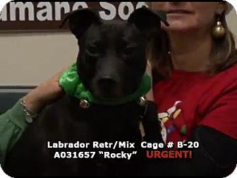 Labrador Retriever Mix Dog for adoption in Newnan City, Georgia - Rocky