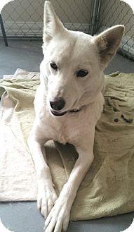 Shepherd (Unknown Type) Mix Dog for adoption in Lancaster, Kentucky - Niah
