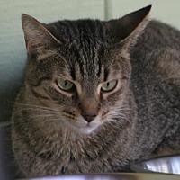 Adopt A Pet :: Reba - North Fort Myers, FL