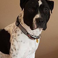 Adopt A Pet :: Rex - Beacon, NY