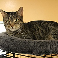 Adopt A Pet :: Sheena - Boca Raton, FL