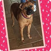 Adopt A Pet :: Juliana - Scottsdale, AZ