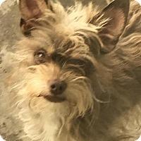 Adopt A Pet :: Benson - Santa Clarita, CA
