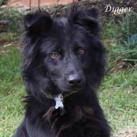 Adopt A Pet :: Digger - Madisonville, TN