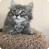 Adopt A Pet :: T-Rex - Vacaville, CA