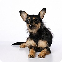 Adopt A Pet :: Cora *special needs* - Torrance, CA